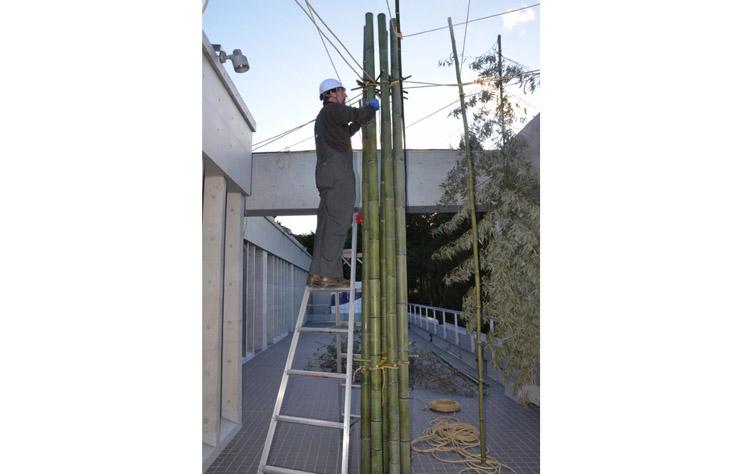 todd hagino 151208 bamboo forest DSC_7174