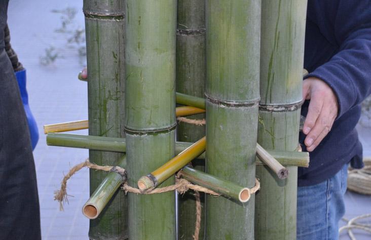 todd hagino 151208 bamboo forest DSC_7164